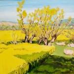 Mézy-Moulin, le champs de colza