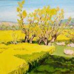 Mezy-Moulins, le champs de colza